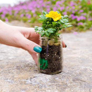 Flower Planter With a Twist